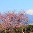 桜並木から富士山