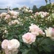 今年も神代植物公園のバラ