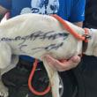 生後5か月の仔犬の体に「タダ」と落書きし捨てた女(米)