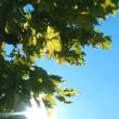 地には木の実 空には太陽 秋