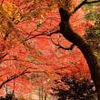 今高野の紅葉