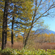 神無月十九日、秋の麒麟草― alert