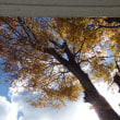 落ち葉の舞い散る・・