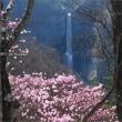 華厳の滝とアカヤシオ  ~明智平にて