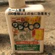 害虫対策と土と薬剤・ニーム250種類の虫に効果有り(ハーブ)