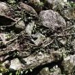 尾鷲の石垣(三木里町No6)と代々木公園「こども園」