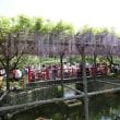 亀戸天神藤祭り