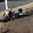 国営昭和記念公園の「節分草」