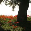 日の出と彼岸花