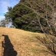 いい天気です。^_^  今日は八幡西区で木の剪定の仕事をしています。暖かく、この前の寒さが夢みたいです。