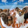 暑さ対策の豆知識~♪  犬のしつけ教室@アロハドギー