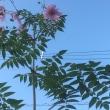 一枚の花弁