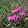 春の休息日;鎌倉中央公園をノンビリ散策
