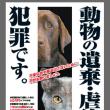 動物虐待 STOP!進捗リポート