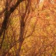 紅葉を見下ろす空中散歩~雲仙ロープウェイ