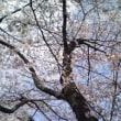 ランチ at 青山霊園