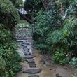 九州を旅する   ブーゲンビリアと雨の武家屋敷