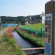 埼玉県日高市 巾着田の曼珠沙華(彼岸花)を見に行ってきました。
