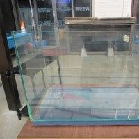 ガラス水槽