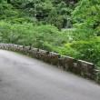 45 JR保津峡駅からつつじ尾根を経て愛宕山 三角点 2018.05.19