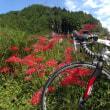 今日は やっぱりロードバイク 「ピナレロ号」 ~秋の大原 青空 コスモス 彼岸花 DURA-ACEは峠に強い~
