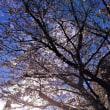 2018年3月22日JR板橋駅から下板橋駅遊歩道の桜
