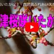 河津桜は咲いたかな?・・・鹿児島の風景