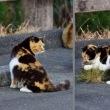 睨む猫 じゃれる猫 (志摩市大王町)