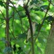 林では、キビタキのメスがいたよ。