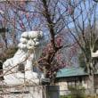 紅梅が咲き始めた日吉八幡神社境内