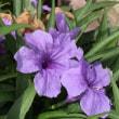 和紙の様な花