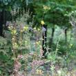 秋の旅と山庭の花