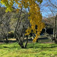 iPhonexで撮る、秋晴れに映える黄色とオレンジ色の風景