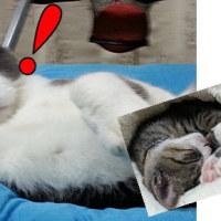 先住猫×新入り子猫