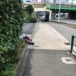 朝の新宿。倒れてる人が多い