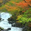 照葉峡の紅葉 1