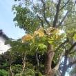 「花水木の会」 農家レストランへ