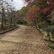自然公園の秋