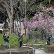 横浜公園の梅