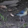 鳥見 20