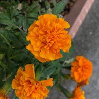 夏の花が、、