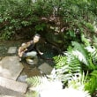 東京ぶらりカメラの旅・明治神宮御苑 菖蒲田
