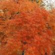マッキーの『四季を楽しむ』:都内で楽しむ紅葉