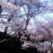 天下第一の桜と高遠城跡