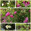 雑草園の果樹と花