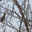 今日は野鳥たくさん