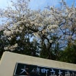 『咲いていて』 学校の桜