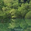 飯豊 白川湖のグリーン