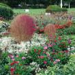 山下公園の花々の巻