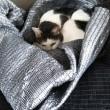 猫の巣篭り改良中
